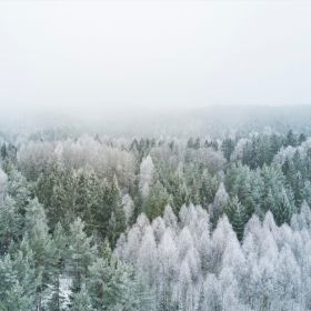 forestry_thumbnail